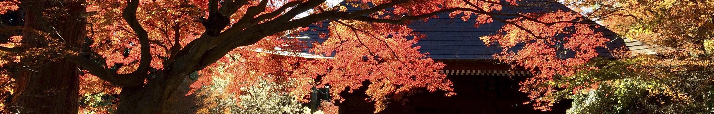 普門寺の紅葉